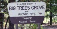 Big Trees Interpretive Trail Forest View Trail