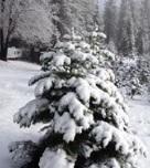 Snowy Peaks Tree Farm